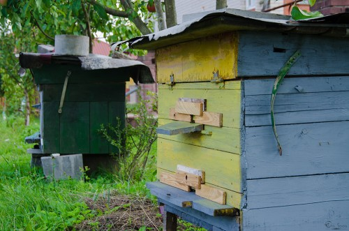 пчёлы Eho Severa