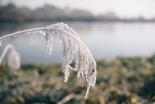 eho severa морозное утро